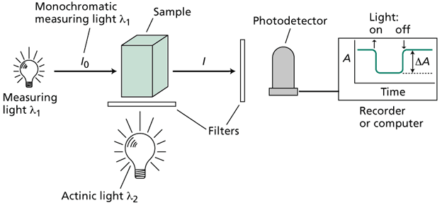 photosynthesis spectrophotometer lab report